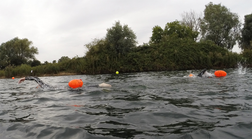 open water swimmers with tow buoys